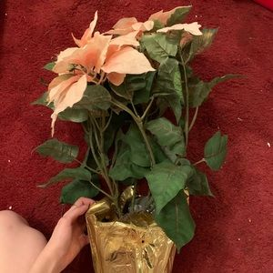 Other - Pink poinsettia final $